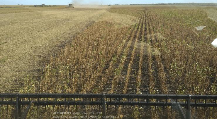 Tristeza na Argentina: lavouras de soja sofrem com a seca