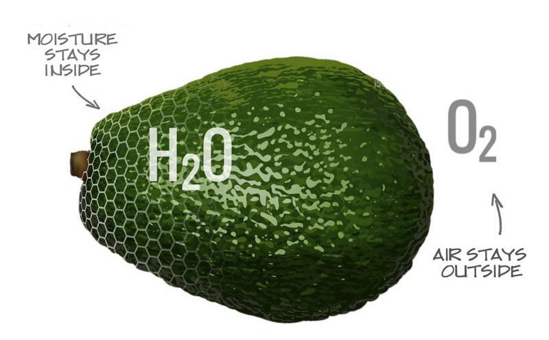 Apeel desenvolve biofilme que protege frutas por semanas