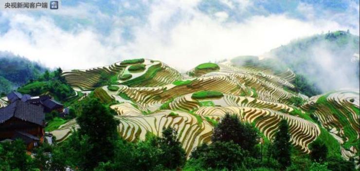 Terraços de arroz na China são reconhecidos pela FAO como Patrimônio Agrícola Mundial