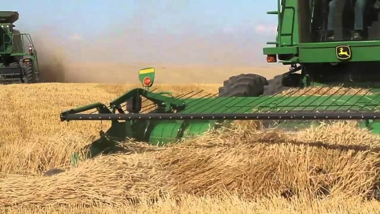 A maior lavoura de trigo do mundo