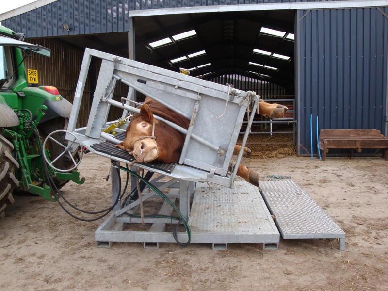 Boato diz que tronco tombador é máquina de esmagar vacas