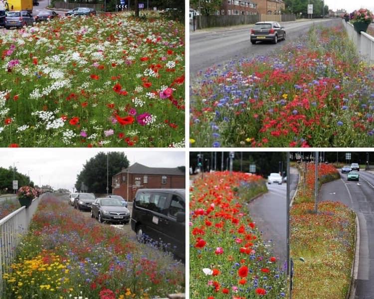 Prefeitura planta flores