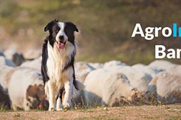Banco financia cão